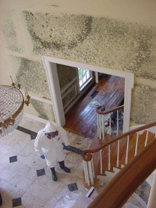 mold removed from wall